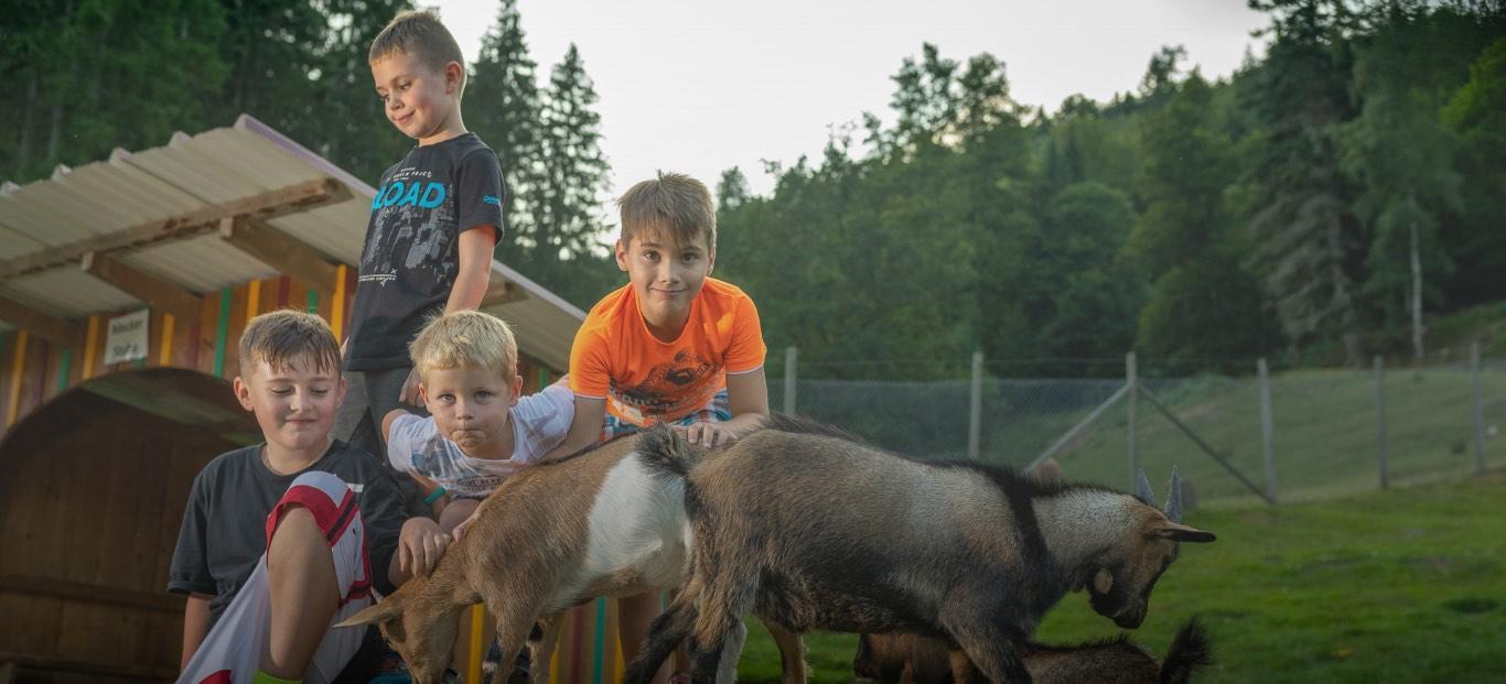 Kinder streicheln Ziegen aus unserem Tiergehege